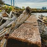 """Staten Island Driftwood"" by mgarbowski"
