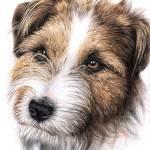 """""""Jack Russell Terrier Portrait"""" by ArtsandDogs"""