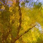 """Growth"" by Woodsman"