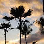"""Palm Trees in the sunset sky"" by NicholeBurke"