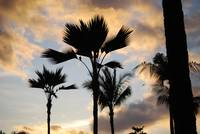 Palm Trees in the sunset sky