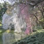 """Brooklyn Botanic Garden"" by myprojectlife"