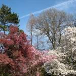 """Brooklyn Botanic Garden 2"" by myprojectlife"