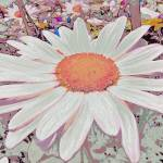 """""""Antique Daisy"""" by petersart"""