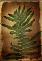 Fern Leaves 3