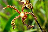 Orchid  Unusual