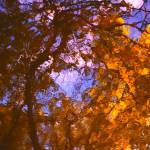 """""""Irradiance"""" by Woodsman"""