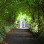 """Path to Bunratty Castle"" by MichaelReilly"