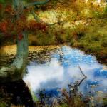 """Reflecting Pool"" by chuckbillingsley"