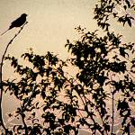 """Bird on a Branch"" by orincassill"