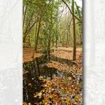 """Clendenan Hike Trail"" by lougheed"