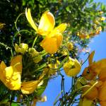 """Yellow Way"" by juliano"