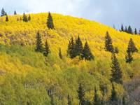 Carpet of Aspen