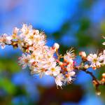 """Spring Blossom"" by Paul_Rumsey"