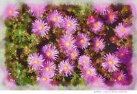 Ice plant in Pastels