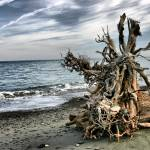 """driftwood along the spit"" by PhotosbyTerrell"