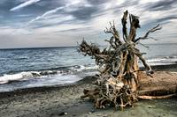 driftwood along the spit