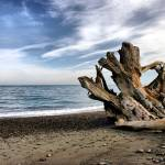 """Driftwood one"" by PhotosbyTerrell"