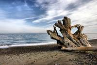 Driftwood one