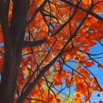 """Fall trees"" by baabz"