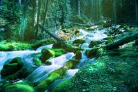 Forest Stream