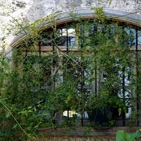 Vine Covered Window in Jbeil 0091
