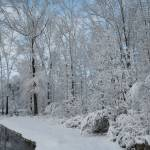 """Snowy Edge of the Wetlands"" by LISA0823"