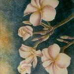 """White Plumeria"" by JMMorgan"