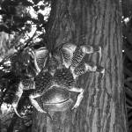 """""""Coconut Crab"""" by LISA0823"""