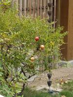 Fruit tree in the Garden with Bells