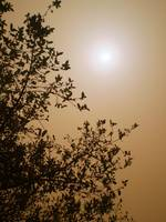 The sun at midday (Dust Storm)