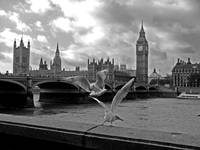 Fly by the Thames