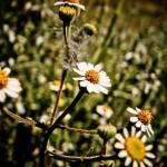 """ahi donde nada florece..."" by fotoarte"