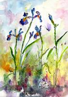 Blue Iris Watercolor Botanical by Ginette