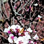 """""""Cherry Blossom  Pink Edit #1"""" by BarbaraLin"""