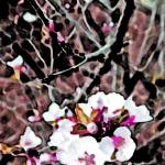 """""""Cherry Blossom  Pink Edit #2"""" by BarbaraLin"""