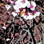 """""""Cherry Blossom  Pink Edit #3"""" by BarbaraLin"""