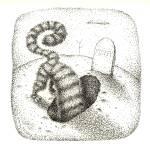 """Curiosity Killed the Cat"" by AnnHuey"