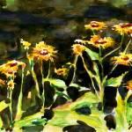 """Elecampane (Inula Helenium) Flowers"" by Linandara"