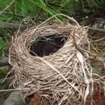 """""""Birds Nest"""" by BGTPhotography"""