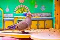 Birds in the Kitchen 5
