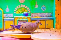 Birds in the Kitchen 6
