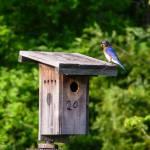 """Bluebird with Grub"" by awsheffield"
