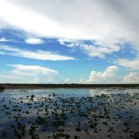 Everglades Panorama Art Prints & Posters by PAUL GOTTSHALL