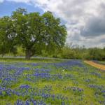 """Texas Hill Country Spring 356"" by PaulHuchton"