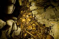 Paris Catacombs: Cimetiere Montrouge Skulls #1