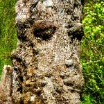 """Tree Of Faces"" by christophergombosky"