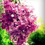 """""""Blossom"""" by SteveRound"""