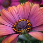 """""""Flower ..."""" by AnneVis"""