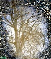 Natures Looking Glass 6